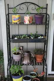 Bakers rack is ideal for hosting pot collections...I am bringing one indoors for my seed starting....