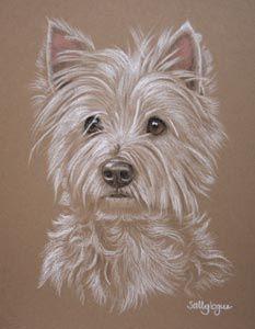 West Highland Terrier portrait of Sparkey
