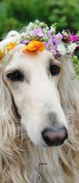 Pin By Hettien On Pet Flowering Mans Best Friend Pets Best Friends