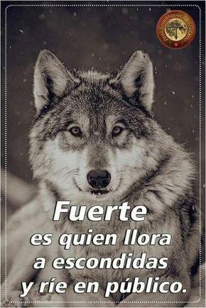 Frases Lobos Frases Lobos Frases Lobos Wisdom Quotes Inspiration Funny Spanish Memes Spanish Inspirational Quotes
