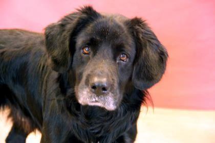 Adopt Walter On Pet Search Pet Search Pets Pet Adoption