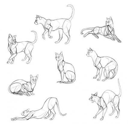 24 Trendy Ideas For How To Draw A Cat Poses Cat Anatomy Animal Sketches Cat Drawing Tutorial