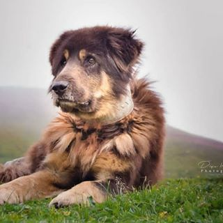 Bhotu And Many Other Dogs Like This Are The Unofficial Guides Of