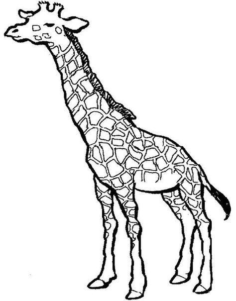 Giraffes Coloring Pages And Baby Giraffes Clipart Best Clipart