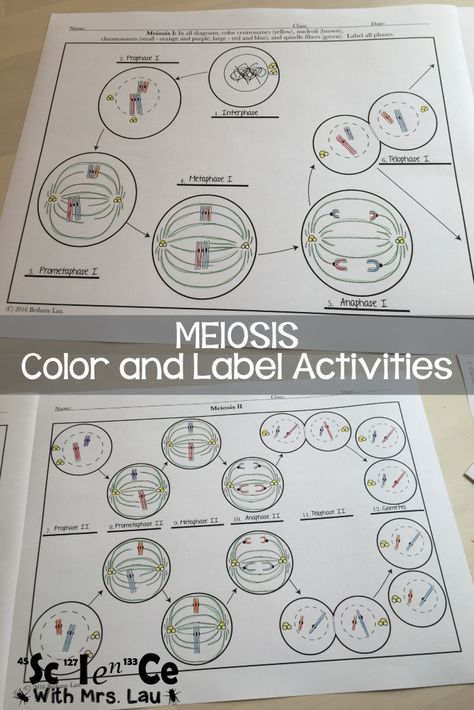 Meiosis diagram activities for high school biology science for meiosis diagram activities for high school biology science for secondary grades biology chemistry physics and more pinterest teaching cells ccuart Gallery