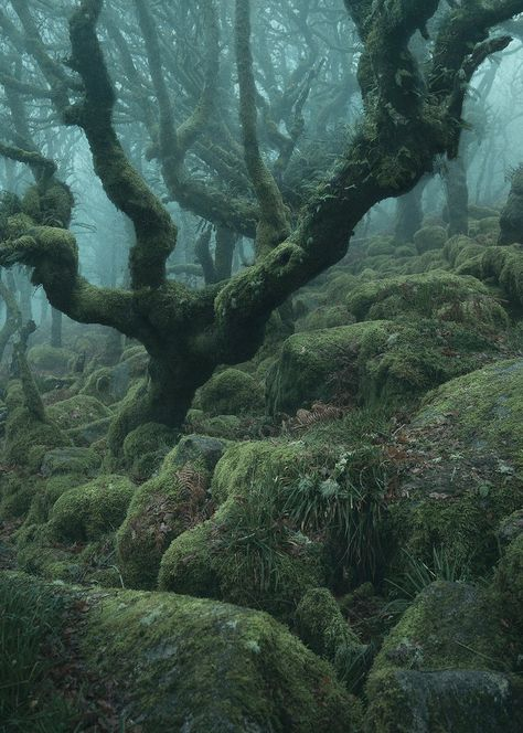 """British photographer Neil Burnell created this """"Mystical"""" series about the trees of the Wistman Forest in Dartmoor, Devon, England. Magic Forest, Dark Forest, Woolworth Building, Mystical Forest, Fantasy Forest, Forest Photography, Ocean Photography, Photography Tips, Dark Art"""