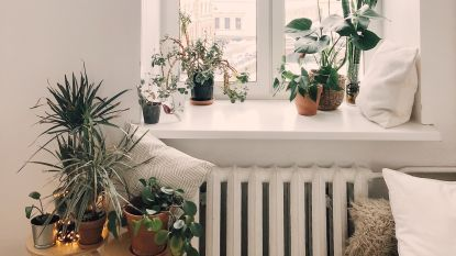 Deze Tien Topfilms En Series Verschijnen In Februari Op Netflix Tv Showbizz Hln Slaapkamer Planten Huisplanten Planten