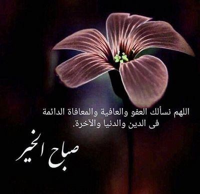 حالات واتس اب صباح الخير 2020 رسائل صباح الخير للواتس اب Good Morning Arabic Good Morning Images Morning Images