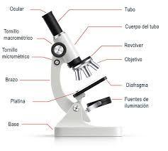 Dibujo De Microscopio Y Sus Partes Busqueda De Google Body Tube Optical Microscope Interactive Presentation