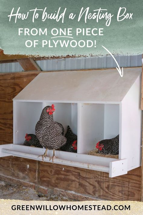 Building A Chicken Coop 36943659432369991 - How to build a nesting box from one piece of plywood for your chicken coop. Source by kelseyjorissen Inside Chicken Coop, Small Chicken Coops, Chicken Coop Signs, Diy Chicken Coop Plans, Chicken Coup, Chicken Tractors, Backyard Chicken Coops, Building A Chicken Coop, Chickens Backyard