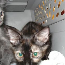 Available Pets At Citrus County Animal Services In Inverness Florida Pet Adoption Animals Pets