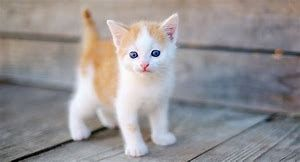 I Am Breathless Seeing So Much Beauty Baby Cats Kittens Cutest