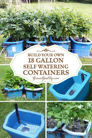 Many versions of self watering containers, also known as self watering grow boxes, self watering pots, and self watering planters are sold online, but you can make them yourself for a fraction of the cost out of some easy to find items. Container Garden G