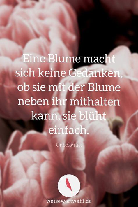 Eine Blume macht sich keine Gedanken, ob sie mit der Blume neben ihr mithalten kann, sie blüht einfach.- Unbekannt - Zitate, Sprüche und Weisheiten - Blumen, Charakter, Selbstbewusstsein