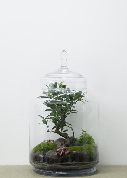 Jungle Jar Jardin De Verre Idees Terrariums Et Ficus