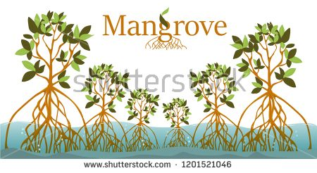 mangrove forest background mangrove logo eps10 vector logo mangrove vector art mangrove forest background mangrove