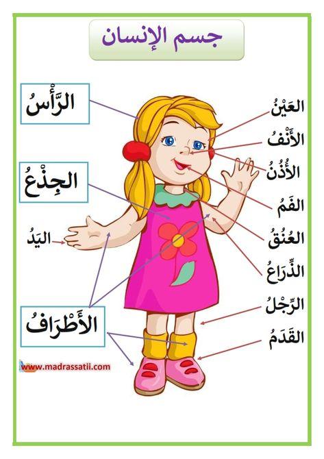مكونات جسم الانسان الرأس و الجذع و الأطراف Madrassatii Com Learning Arabic Arabic Kids Learning English For Kids
