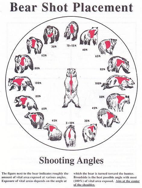Elk Anatomy Hunting Butchering Pinterest Elk Anatomy And Elk