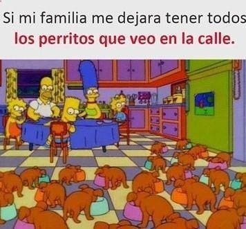 Ami Me Dan Ganas De Recoger A Todos Los Perritos De La Calle Ok Me Dan Pena Ok Eos Tienen Hambre Frio Etc Memes New Memes Spanish Memes