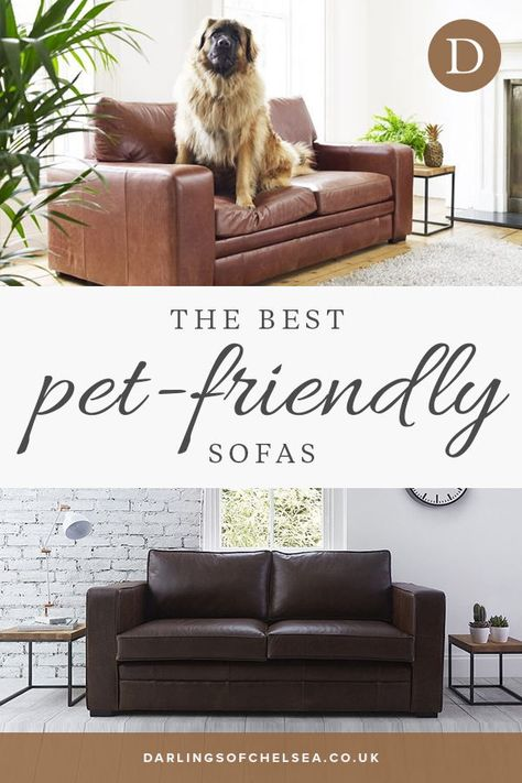 Fabric and leather sofas for pet lovers (With images) | Pet