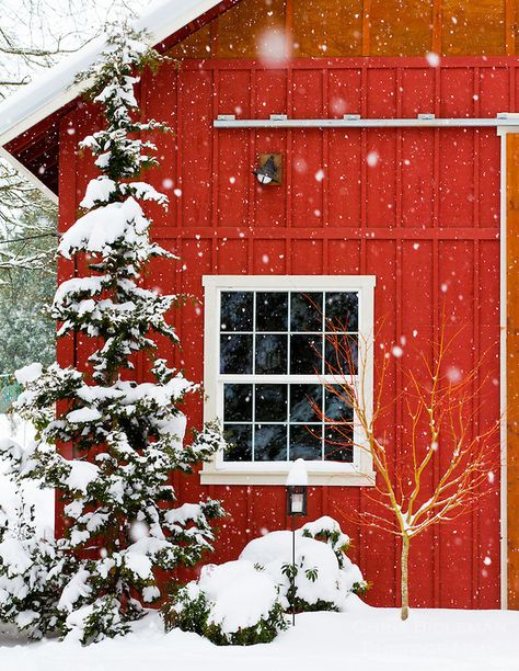 Red Barn and tree in falling snow in Winter Christmas Tree Farm, Christmas Scenes, Country Christmas, Winter Christmas, Burlap Christmas, Painting Snow, Winter Painting, Country Barns, Old Barns