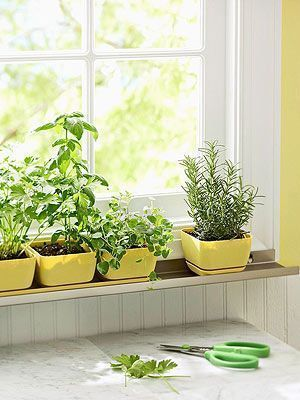 Personal Herb Garden My Goal Would Be To Have A Window Sill Herb Garden With C Garden Gardenmy In 2020 Herb Garden In Kitchen Windowsill Garden Diy Herb Garden