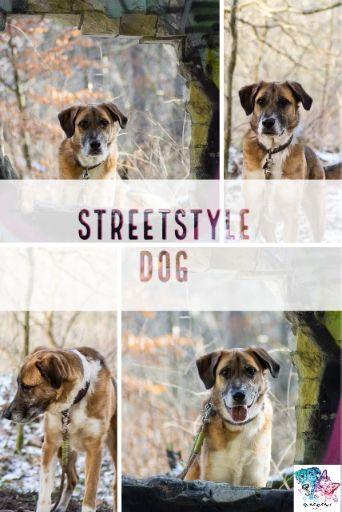 A Streetdog Named Enkman Video Video Hund Unterwegs Hunde Fotos Tierschutz Hunde