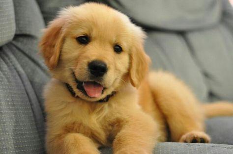 Este Perro No Es Un Perro Cualquiera Este Perro Es Un Superhero