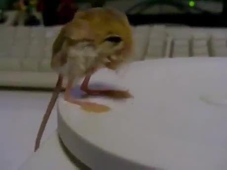 was ist das kleinste säugetier der welt