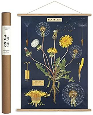Amazon Com Cavallini Papers Co Cavallini Vintage Dandelion Hanging Poster Kit Multi Posters Prints In 2020 Dandelion Wall Art Etsy Wall Art Hanging Posters