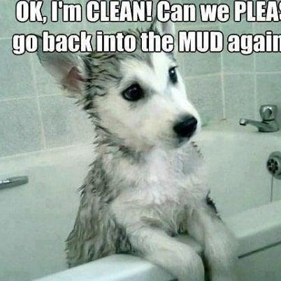 Funny Dog Memes Clean Funny Dog Memes 2018 Dog Meme Face Cute Dog Memes Dog Memes Best Dog Memes Cute Husky Puppies Cute Animals Baby Huskies