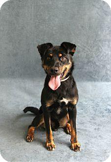 Greensboro, NC - Shepherd Mix. Meet Wario, a dog for adoption. http