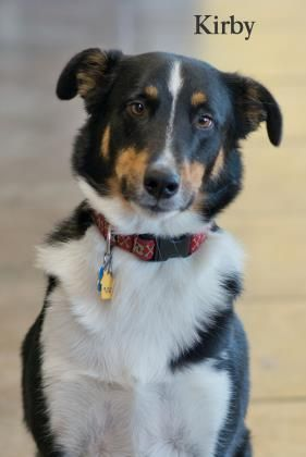 Adopt Kirby On Petfinder Australian Cattle Dog Blue Heeler Dogs Australian Cattle Dog