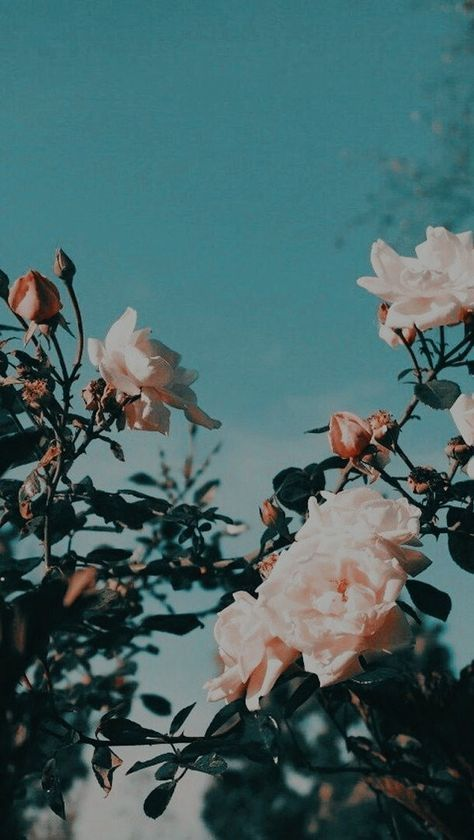 40 Ideas Flowers Photography Tumblr Plants Aesthetic Backgrounds Plant Wallpaper Aesthetic Iphone Wallpaper