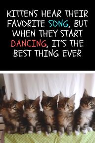 Kittens Hear Their Favorite Song But When They Start Dancing