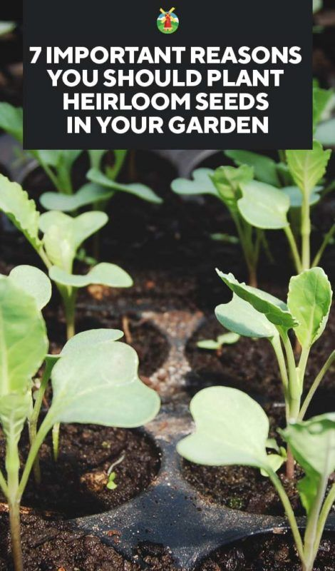 7 Important Reasons You Should Plant Heirloom Seeds In Your Garden