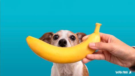 90 Ideas De Alimentación De Los Perros En 2021 Perros Mascotas Alimentacion