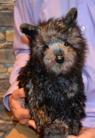 Cairn Terrier Dog For People With Alzheimer S And Caregivers