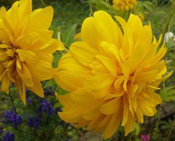Ogrodniczka Pl Twoj Cudowny Ogrod Rosliny Ogrodowe Na Dzialce I Domowe Plants Naga