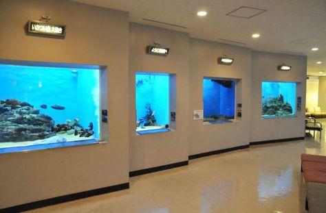 宮津市にある水族館 丹後魚っ知館 は子連れファミリーがゆるく楽しめるよ 水族館 魚 カサゴ
