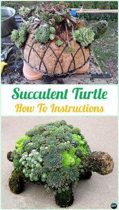 Topiary turtle an amusing & fun succulent garden craft.