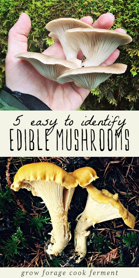 Mushrooms are one of the most fun things to learn how to forage for, but it can be an intimidating and sometimes dangerous practice! Learn how to identify and forage for these wild mushrooms. Edible Wild Mushrooms, Growing Mushrooms, Stuffed Mushrooms, Mushroom Identification, Edible Wild Plants, Mushroom Hunting, Mushroom Fungi, Wild Edibles, Survival Food