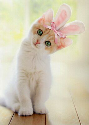 Details About Kitten With Bunny Ears Cat Easter Card Greeting