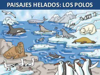 Paisajes Helados Polo Norte Y Polo Sur Fauna Costumbres Videos Animales Del Artico Animales Polo Norte