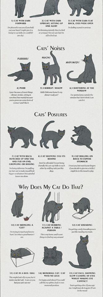 Cat Stomach Making Noises : stomach, making, noises, Cats!, Ideas, Cats,, Crazy, Kittens