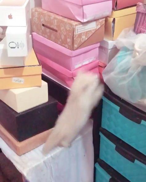 Moncat...   Moncat .  . #cats #cat #catsofinstagram #catstagram #instagram #catlover #instacat #kitten #meow #kitty #pet #kittens #dogs #animals #catlovers #catoftheday #petstagram #catlife #lovecats #kumaloren #cats_of_world #catoftheday #cat #cats #catsofinstagram #catstagram #cat_features #catlovers #catloversclub #instacat #catlover #catsagram #catofinstagram #cutecats #catslife