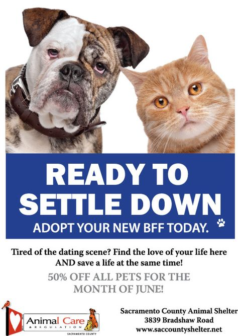 Best Pet Adoption Marketing Ideas Images On Pinterest Pet - Animal shelter makes hilarious low budget cat commercial that ends up going viral