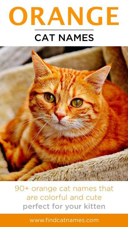 Orange Cat Names 150 Colorful Ideas Find Cat Names Cat Names Cats Orange Cat