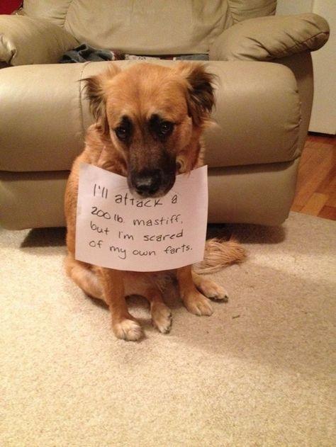 9207105024 relatable post funny dogs, dog shaming y fun Animal Jokes, Funny Animal Memes, Dog Memes, Cute Funny Animals, Funny Animal Pictures, Cute Baby Animals, Funny Cute, Funny Dogs, Funny Memes