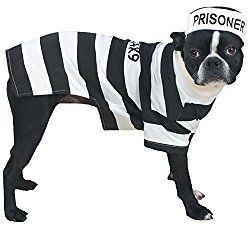Best Dog Costumes For Black Dogs Pet Halloween Costumes Pet